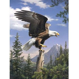 Reeves Artist Collection 'Screaming Eagle' Paint by Number - 13128654 - Overstock - The Best Prices on Paint by Number - Mobile