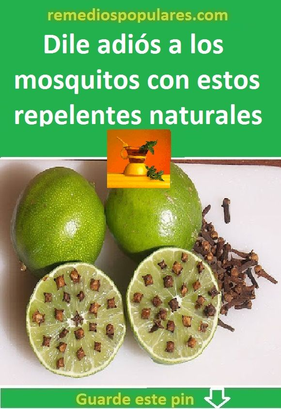 Dile Adiós A Los Mosquitos Con Estos Repelentes Naturales Y Caseros Fruit Food