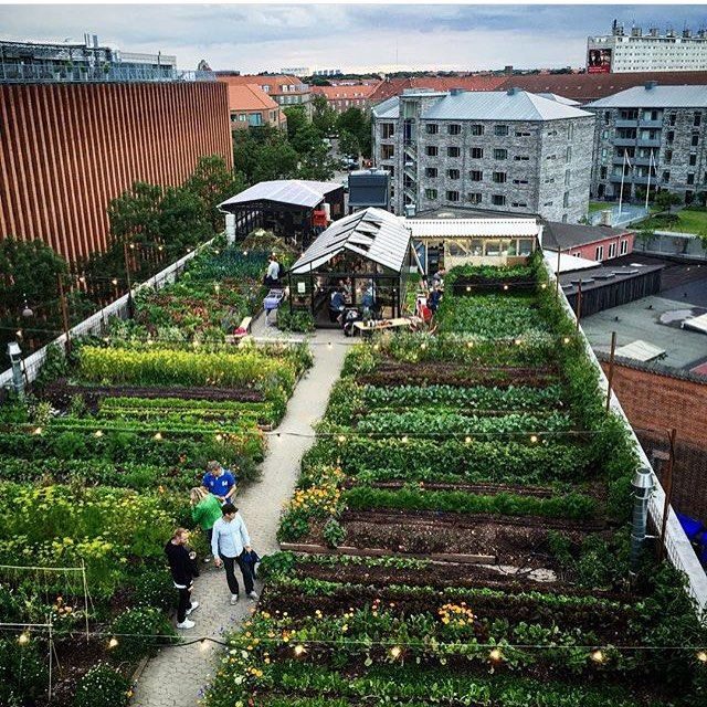 A shot of the #rooftopfarm by the foodloving family behind Norwegian foodblog @smakenavoslo  #stedsans #oestergro by stedsans_cleansimplelocal