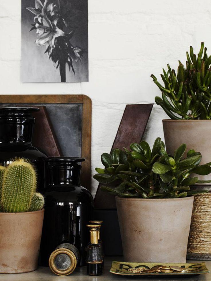 we love cactus! |Casa Atelier blog|