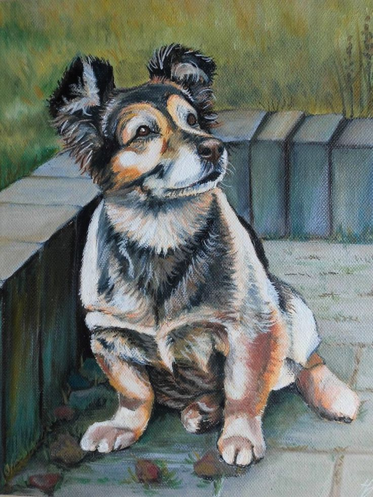 Oil painting - Sabcia dog