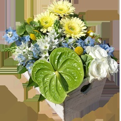 This modern arrangement is ideal for welcoming a new born baby. Made with gerberas, roses, anthuriums and delphiniums all in a vintage style Trug.