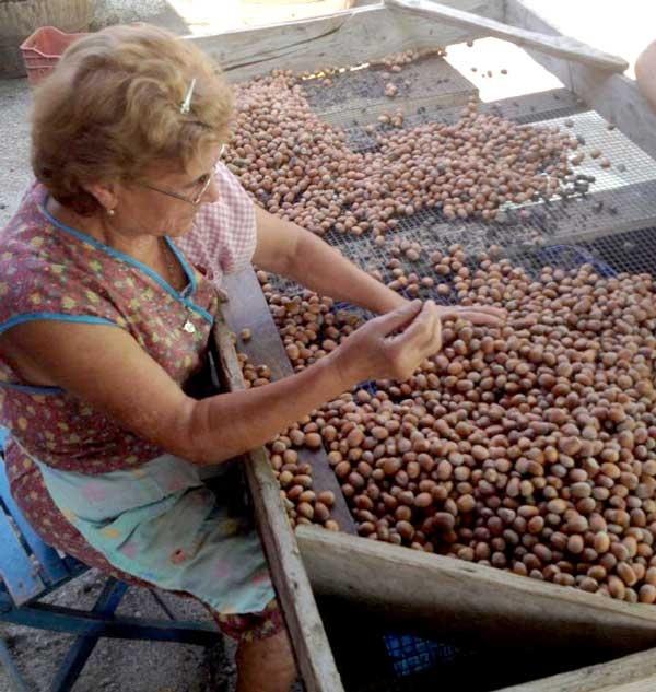 Antonietta seleziona le noci.