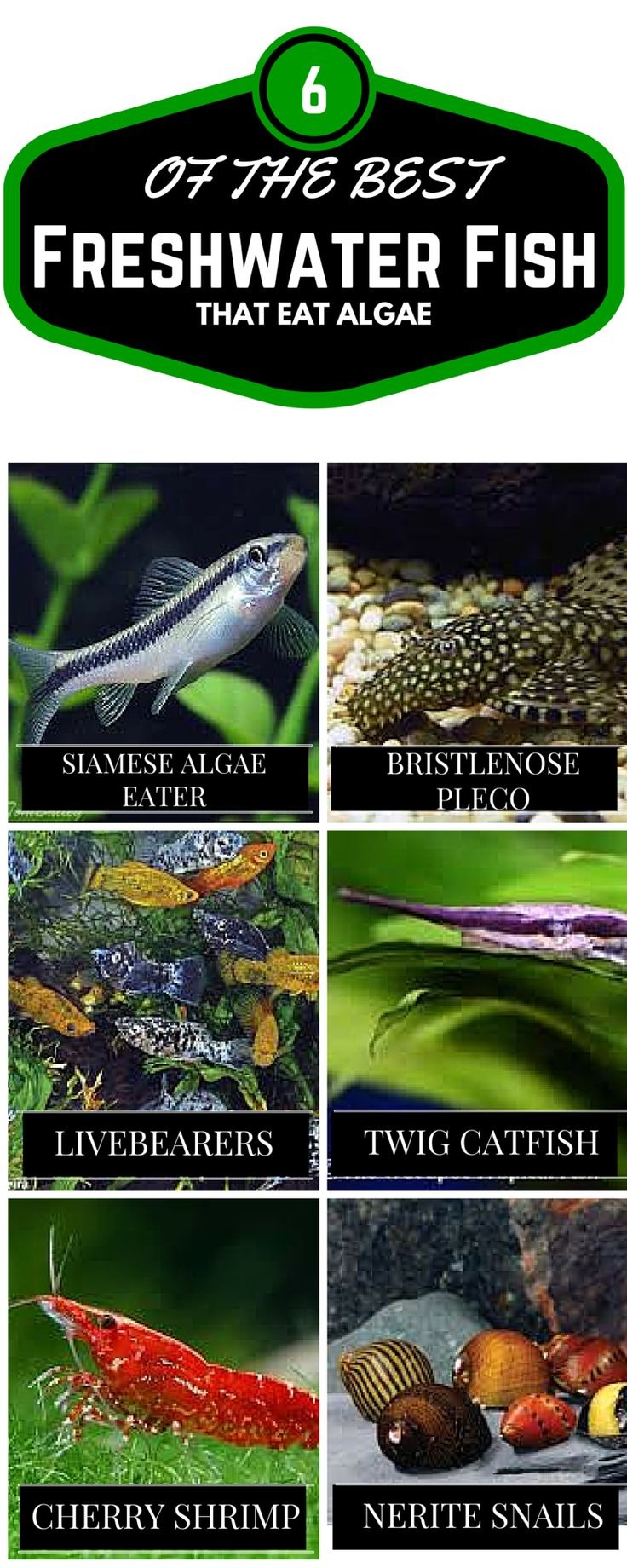 Freshwater fish aquarium accessories - 37 Easy Ways To Control Algae And Get Crystal Clear Aquarium Water