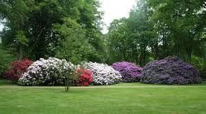 Resultado de imagen para arbustos con flores lilas