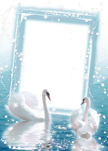 Transparent Photo Frame with two Swans