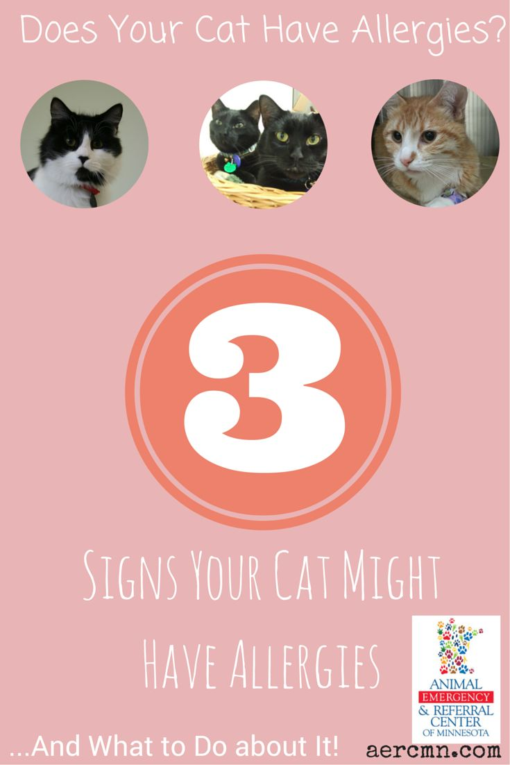 Does your cat have allergies? Our veterinary dermatology department says to look for these 3 telling signs!