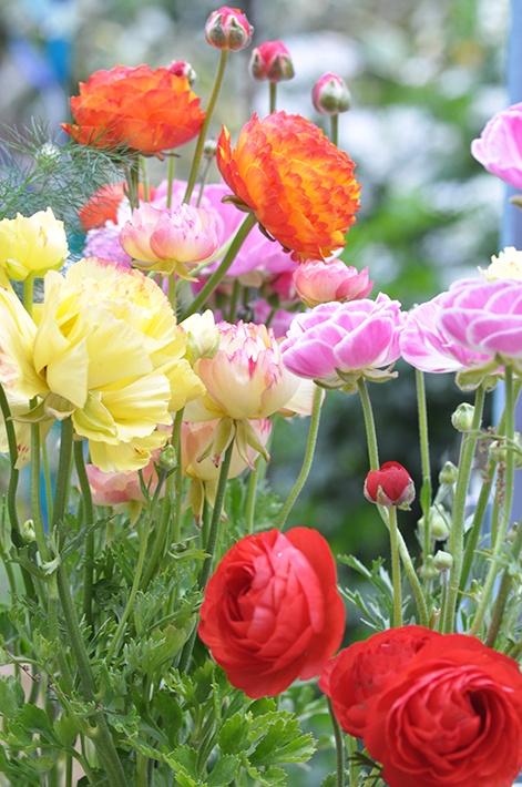 bonbons anglais mes fleurs pinterest bonbon anglais et fleur. Black Bedroom Furniture Sets. Home Design Ideas