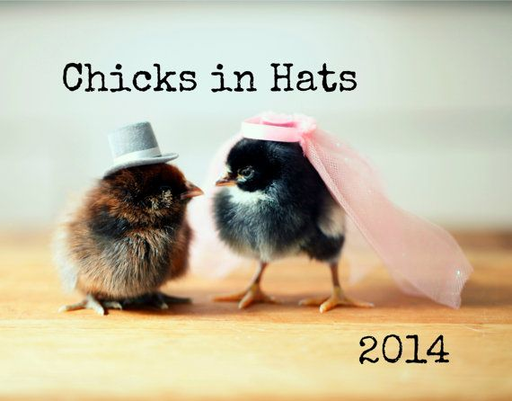 Magnet Chicks in Hats Chicken Wearing a Pink by chicksinhats