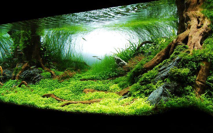 Planted aquarium: aquascape