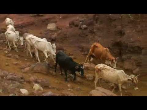 Kenyan Pastoralist Song (Length: 1:36) Traditionally sung by mothers, this song describes the importance of cattle to a pastoralist community living in a semi-desert area. Loosely translated from the original.