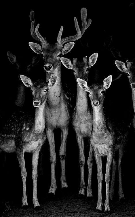 A gang of deer bySaeed Al Alawi