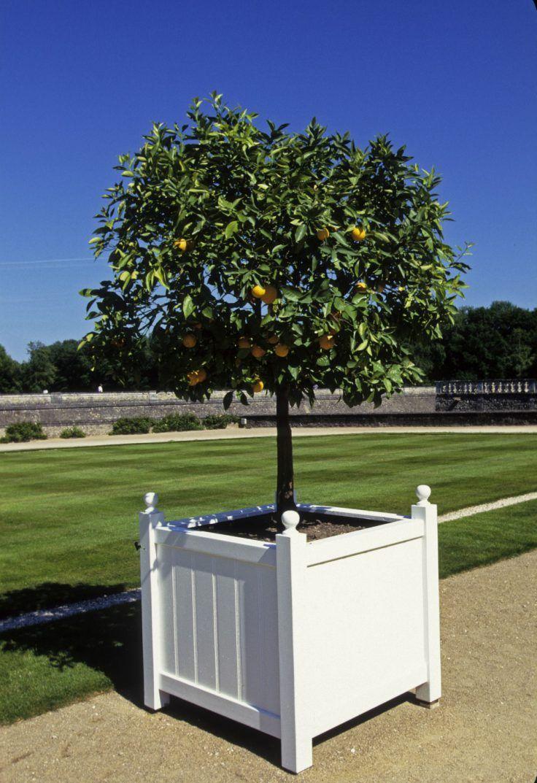 Oranger En Pot Tous Nos Conseils Pour Bien Le Cultiver En 2020 Idee Deco Exterieur Cultiver Arbuste En Pot