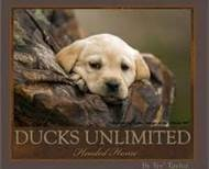 ducks unlimited labrador pictures