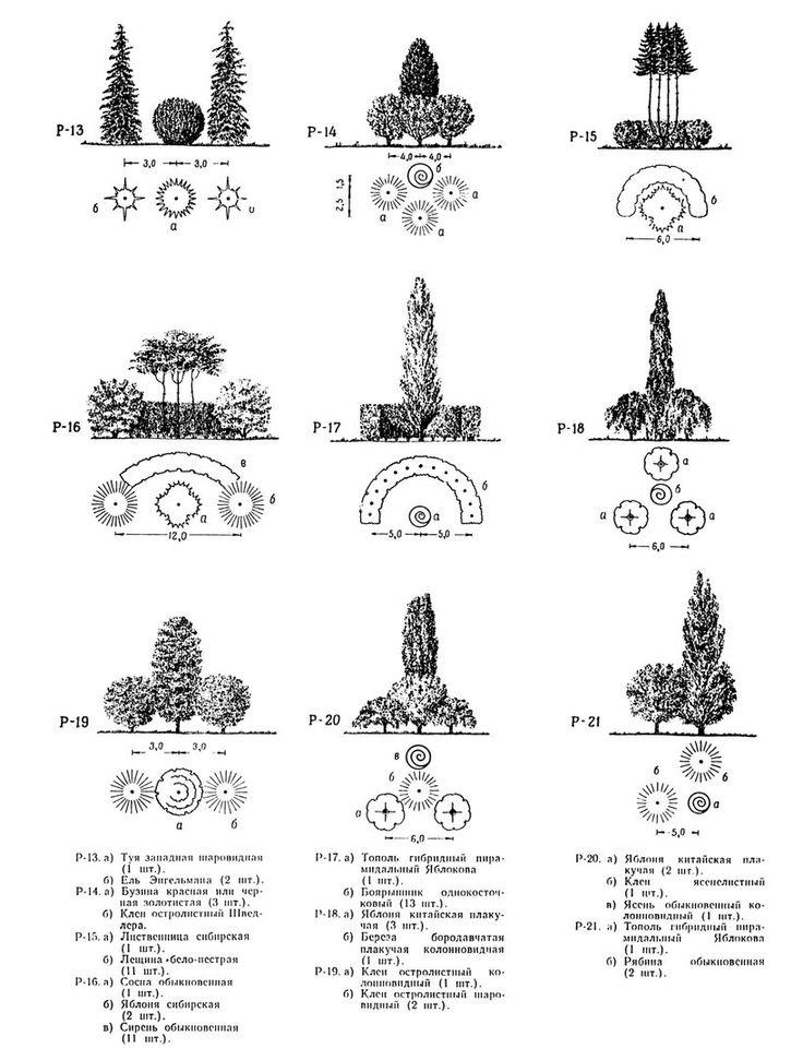 25 best ideas about koniferen pflanzen on pinterest. Black Bedroom Furniture Sets. Home Design Ideas