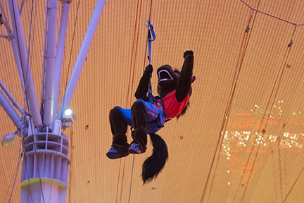 Buster Bronco ziplines across the Fremont Street Experience during the Maaco Bowl Las Vegas welcome reception. The Broncos take on Univeristy of Washington Huskies Dec. 22.