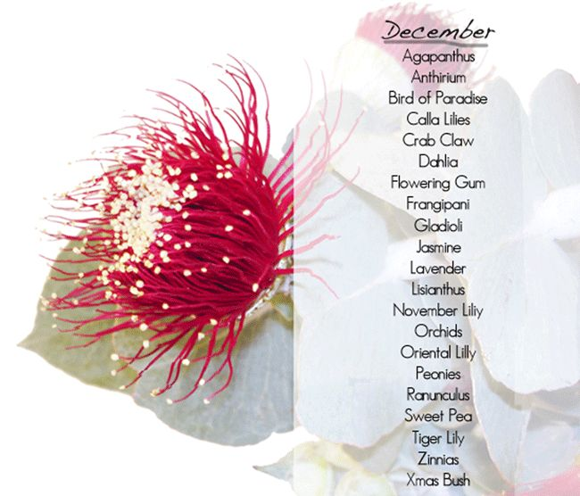 Wedding Flowers December: 7 Best Seasonal Flowers By Month Images On Pinterest