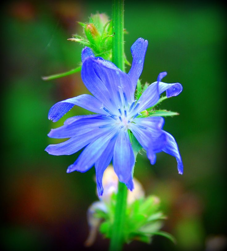 Blue Radiant Flower by Lars Green / 500px