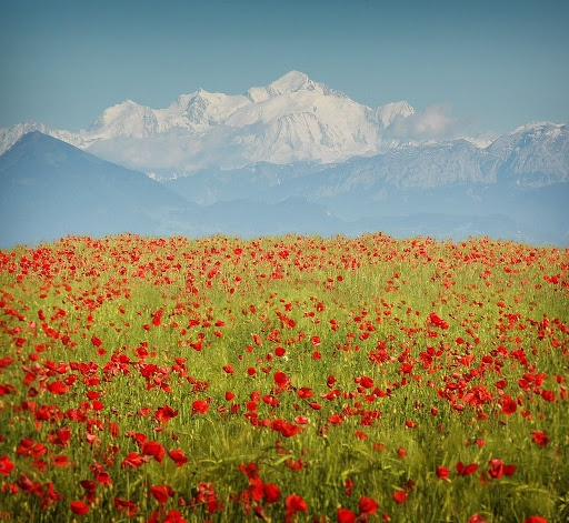 Wherever this is, I want to go!!! So beautiful! Wild flowers and mountains.
