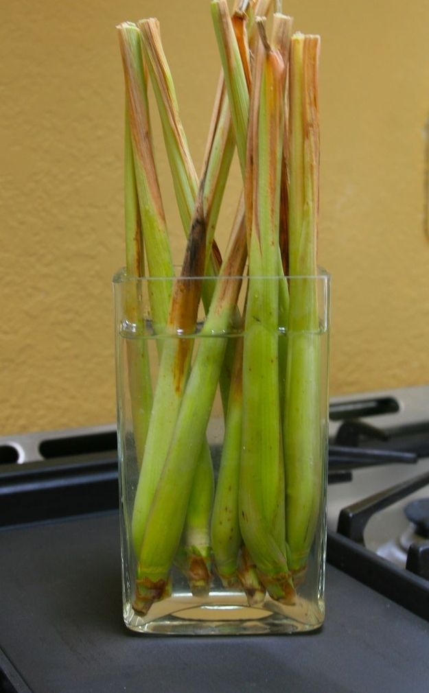 Lemongrass can grow from its discarded roots.