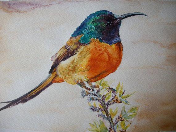 Uccello Colibrì ad acquerello  dipinto originale / di Stellangelo