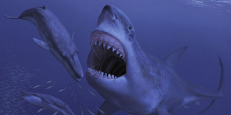 Fossilized bones riddled with enormous shark bite marks reveal the mega shark's main prey.