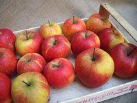 Tradiční uskladňování ovoce a zeleniny