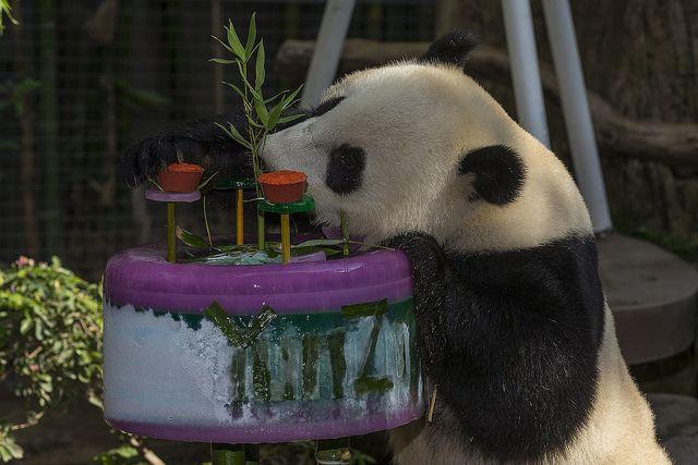 met this Panda.