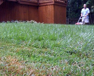 6 grasses for low maintenance, drought-resistant lawns from Treehugger.com