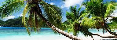 Palm Tree Paradise in Florida Keys