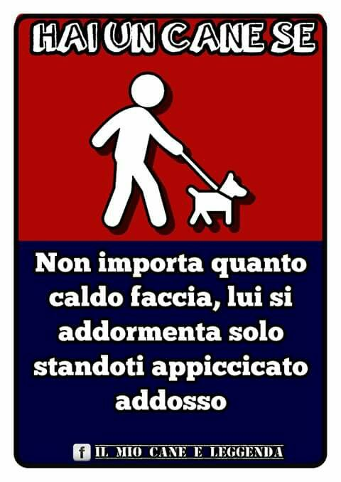 Cane dog