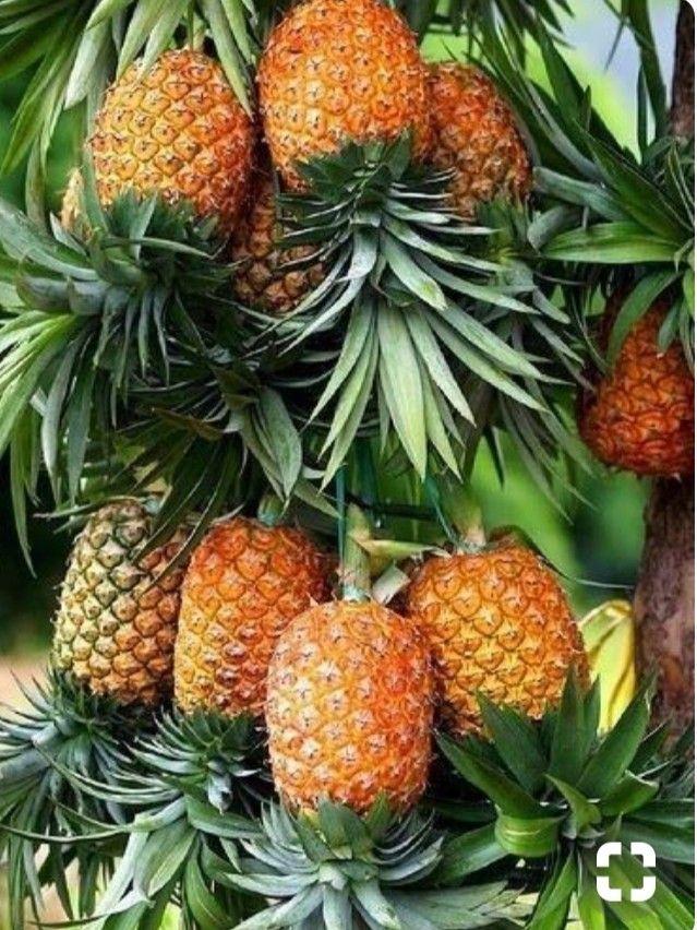Pin Su Frutta