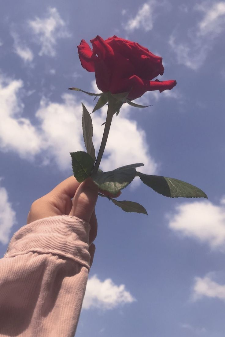 Things Aesthetic Roses Cool Pictures For Wallpaper Flower Aesthetic