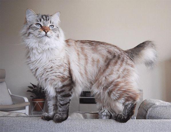 warrior cat untold tales