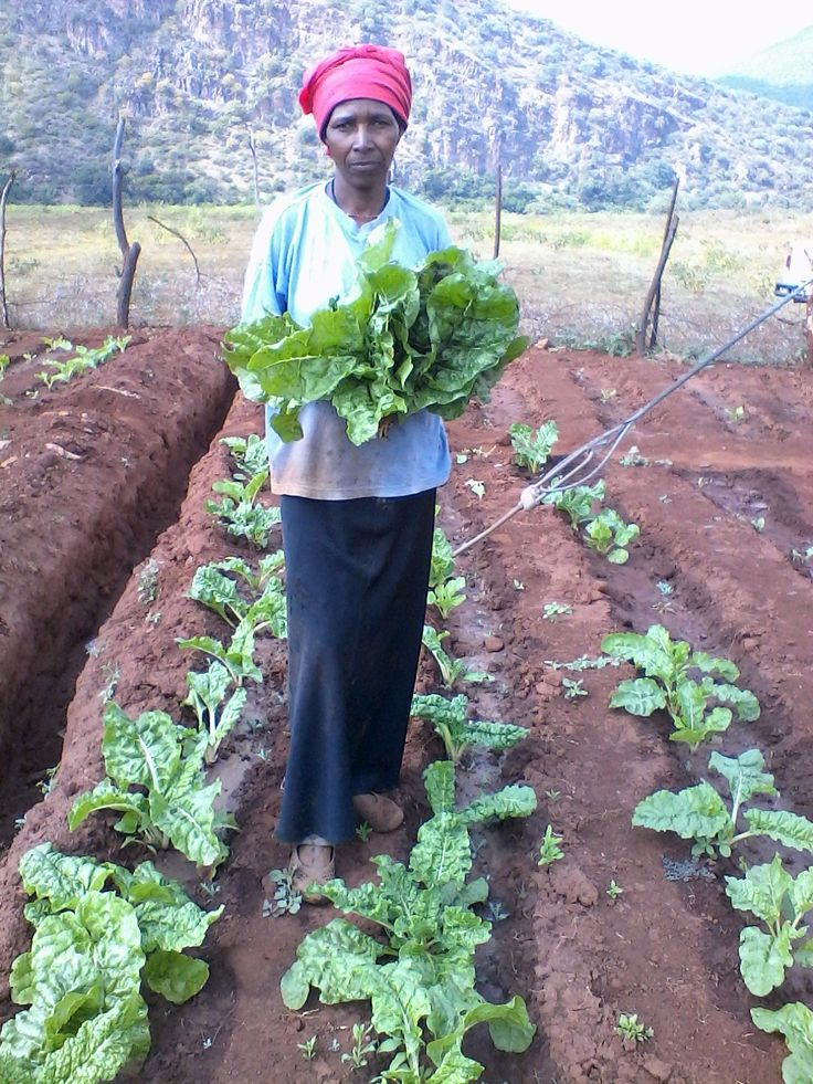 In the #Child #Aid program families have started backyard gardens in their homes generate income. #Humana People To People #project