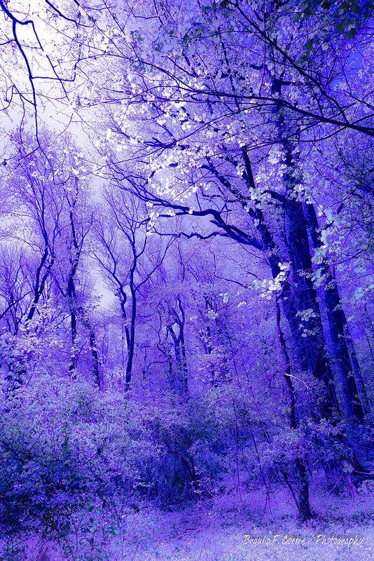 forest aesthetic purple nature backgrounds landscape mistic cute pretty wallpapers fantasy flickr 風景 landscapes read pro 景色