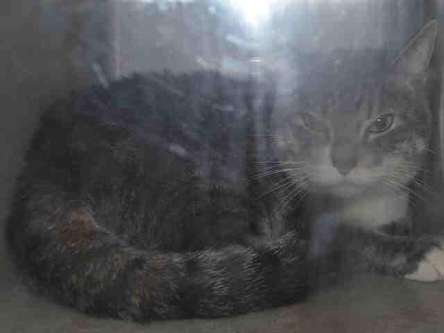 MYSTIC - A1094236 - - Brooklyn  Please Share:***TO BE DESTROYED 11/01/16 *** -  Click for info & Current Status: http://nyccats.urgentpodr.org/mystic-a1094236/