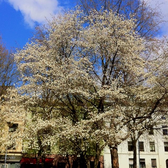 Spring in Oslo. A great feeling :-)