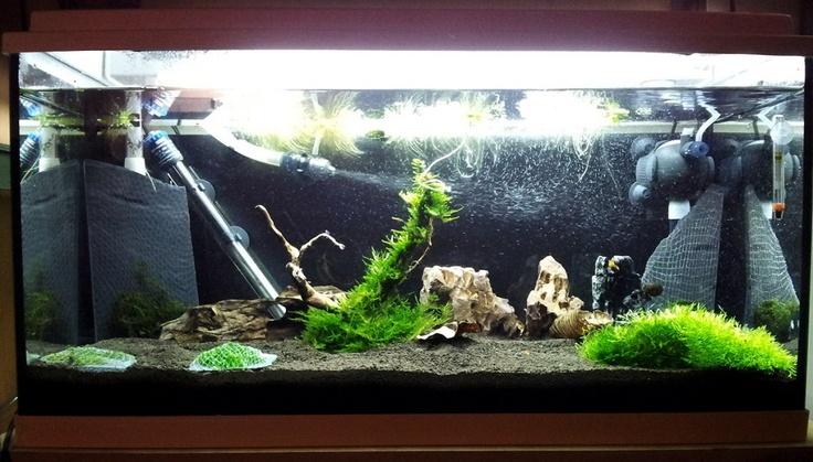 My new Taiwan Bee tank with 15pcs F1 mix shrimps