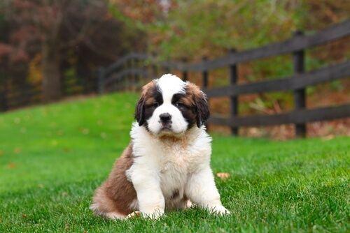 14 nombres creativos para tu perro - Mis animales