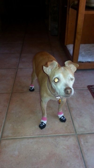 45 Best Dog Socks Amp Dog Leg Warmers Images On Pinterest