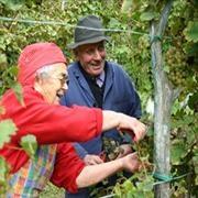 Le radici di Perlage Wines..