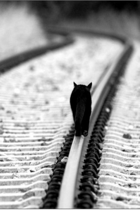 on trackPhotos, The Roads, White Photography, Black And White, Training Track, Bw Photography, Blackcat, Black Cat, Animal