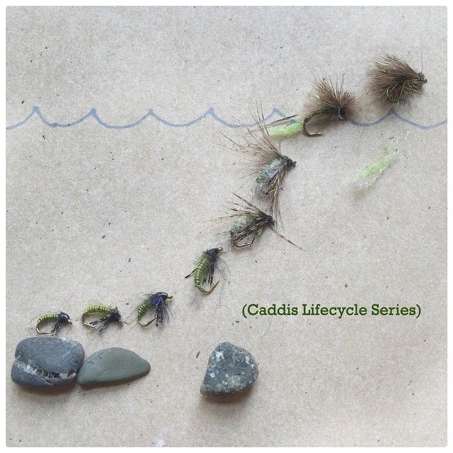 Cool way to show the stages of a caddis lifecycle with fly fishing fly patterns.