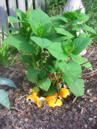 spread citrus peelscayenne pepper in garden to fertilize and keep cats and slugs out