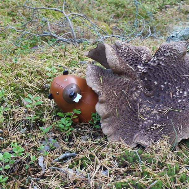 Just a quick reminder under my mushroom house! Still a few hours and just a couple more #offers at #blackfriday #sales. Visit @zunystore #beaver #züny #zuny