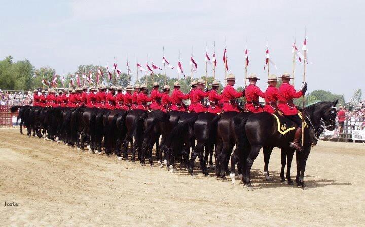 Horses, horse, RCMP, musical ride