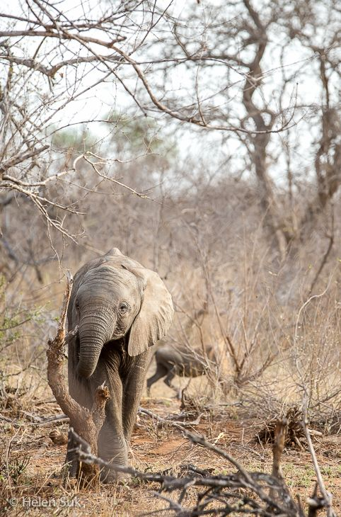 On a continent where few destinations can promise sightings of the famous Big Five, South Africa's Timbavati Game Reserve has earned its bragging rights.