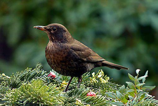 Ptak, Przepustnicy