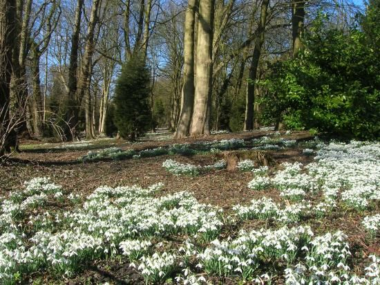 Hopton Hall snowdrop walk